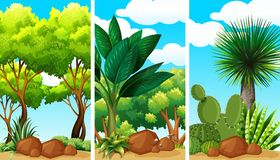 Garden scenes with plants and rocks. Illustration Stock Photo