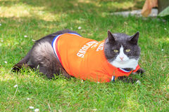 Garden schwalbe. Random image of a fat cat dressed as soccer player for the dutch national team relaxing in the garden in spring in the Netherlands stock image
