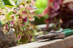 Garden scissors on potplant Royalty Free Stock Photo