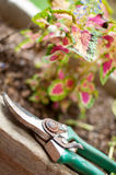 Garden scissors Stock Image