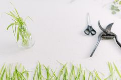 Garden scissors on a white background branches of plants.  Stock Images