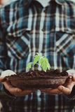 Garden seedling in farmer`s hands Royalty Free Stock Images