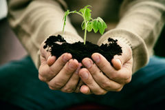 Garden seedling Royalty Free Stock Image