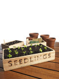 Garden seedlings. In box with pots Stock Photography