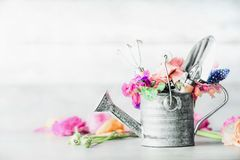 Garden set still life with watering can, gardening tools and flowers on white table. Front view royalty free stock photo
