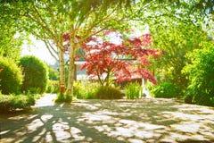 Garden shade Stock Photography