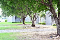 Garden shade Front office building. Great tree shade suitable for walking - sit and rest Stock Photography