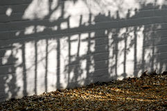 Garden shadows Royalty Free Stock Photo