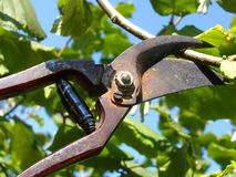 Garden shears Stock Photography