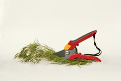 Garden shears royalty free stock images