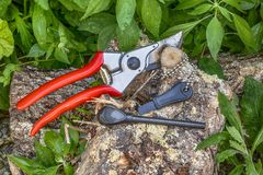 Garden shears, fire starter  on the tree trunk between green leaves. Garden shears and fire starter on the tree trunk in the forest, during camping, outdoor and Royalty Free Stock Images