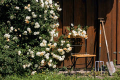 Garden shed with roses and tools. Tool shed in the garden with garden chair, roses and gardening tools Stock Photos