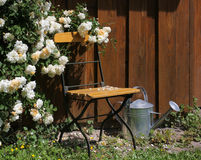 Garden shed with roses and watering can. Tool shed in the garden with garden chair, roses and watering can Royalty Free Stock Image