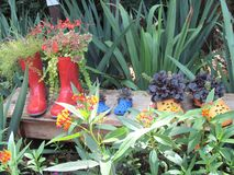 Garden shoes. Red boots and yellow croc flowers Stock Images