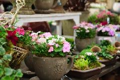Garden shop Stock Photos