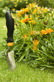 Garden shovel Royalty Free Stock Images