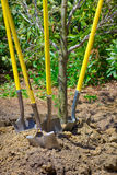 Garden shovels Stock Photo