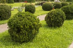 Garden with shrubs bush and green lawns, landscape design. stock images