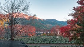 Garden on the side of Lake Kawaguchi, Japan. Early in the morning with a partial sunlit mountain in the background and colorful trees with autumn foliage in royalty free stock photography
