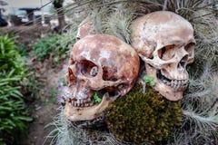 Garden Skull Royalty Free Stock Image