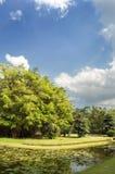 Garden and sky Stock Photography