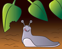 Garden Slug. A cartoon of a slug eating a plant in the garden Stock Photo