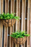 Garden Stock Photography