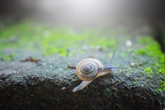 Garden small snail and light flare close up. Selective focus Royalty Free Stock Photography