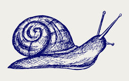 Garden snail. Doodle style. Vector Royalty Free Stock Photography