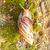 A Garden Snail Stock Photo