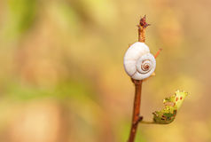 Garden snail crawling on a stem. Tree Stock Images