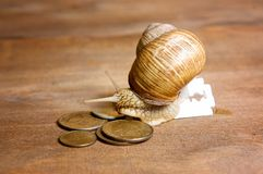 Garden snail creeps from a blade to the coins Stock Photo