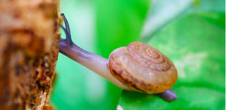 garden snail stock photos