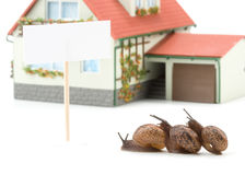 Garden snail and miniature house Royalty Free Stock Photos