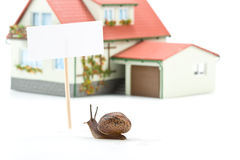 Garden snail and miniature house Royalty Free Stock Photography