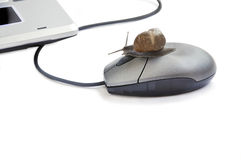Garden snail pressing mouse button. Royalty Free Stock Photo