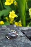 A garden snail Stock Photos