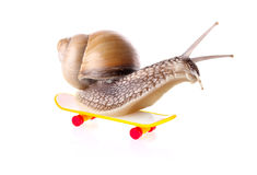 Garden snail on skateboard Royalty Free Stock Photo