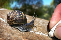 Garden Snail Trail Stock Photos