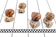 Garden snails Royalty Free Stock Photo