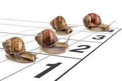 Garden snails Stock Photography