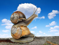 Garden snails Royalty Free Stock Images