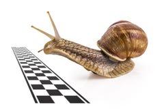 Garden snails Stock Photos