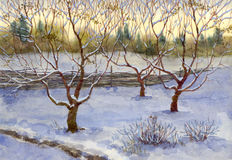 Garden in snow. Watercolor landscape. An orchard was covered with the first snow Royalty Free Stock Images