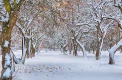 Garden in snow Stock Photos
