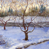 Garden in snow. Watercolor landscape. An orchard was covered with the first snow Stock Photo