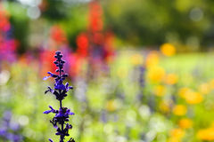 Garden soft Royalty Free Stock Photography