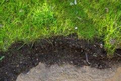 Garden_soil Foto de Stock