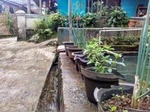 Garden. Somewhere around world Stock Photo