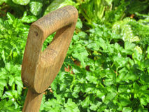 Garden spade handle with a green foliage background Stock Image